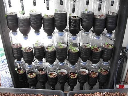 Можно ли клубнику выращивать в пластиковых бутылках?