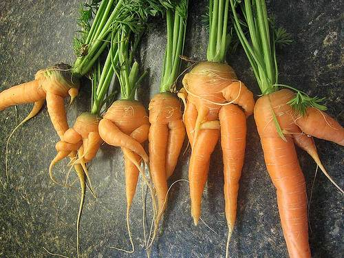 морковку в попе