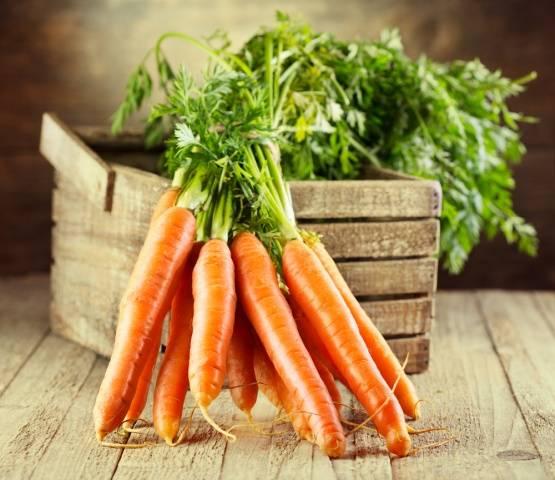 Когда садить морковь на Урале