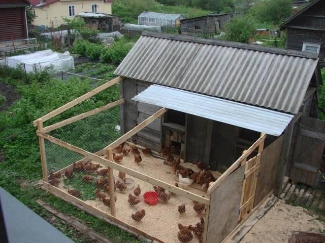 Сарай для цыплят