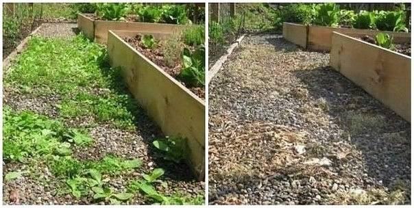 Граунд» от сорняков: инструкция по применению препарата.
