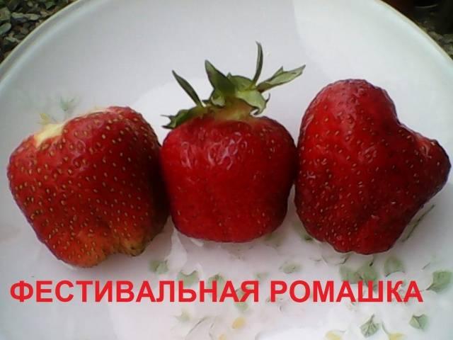 1461_2.jpg