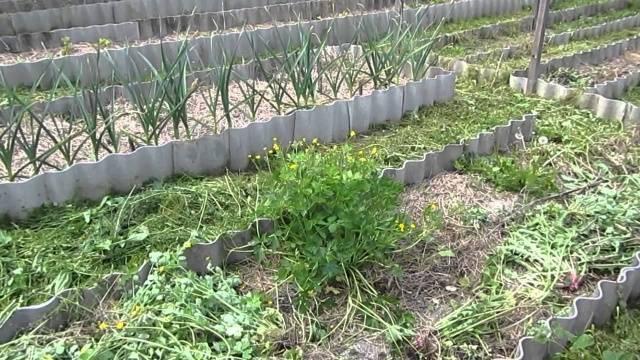 какие бывают сорняки в огороде