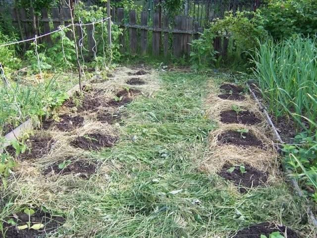 какую траву посадить чтобы не росли сорняки