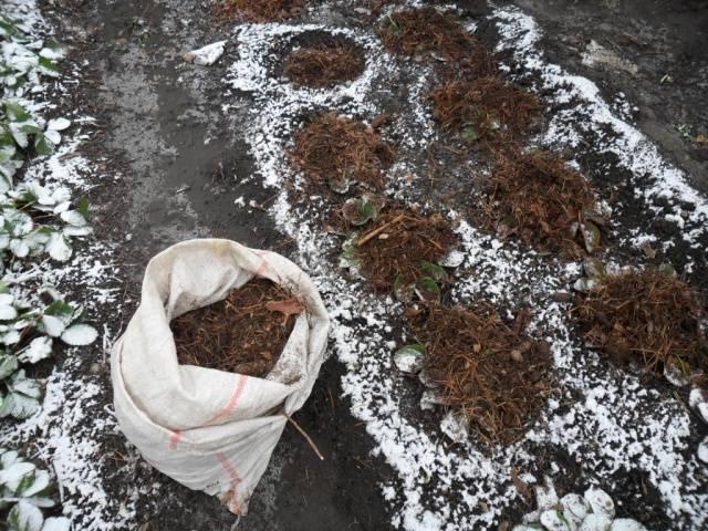 Чем подкормить клубнику на зиму осенью