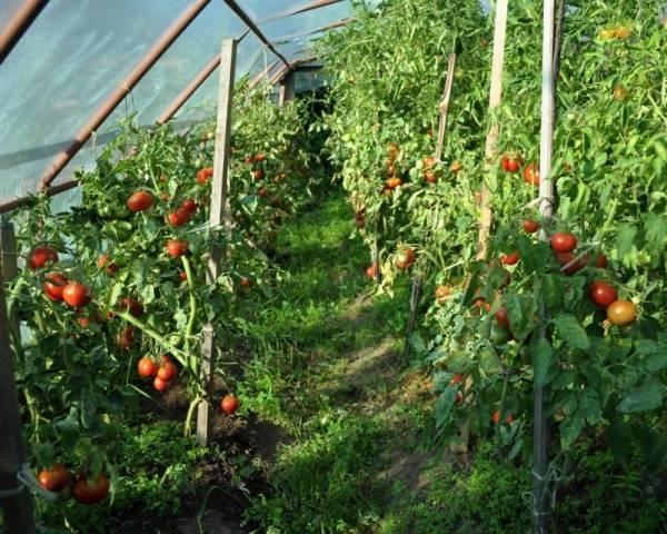 Система полива помидоров