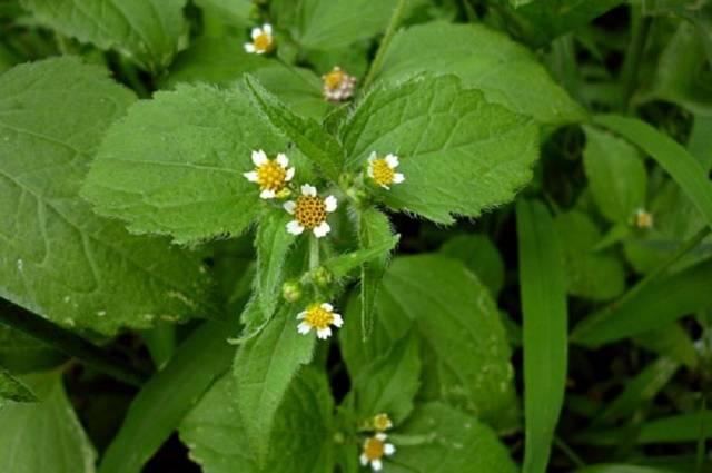 какие травы против аллергии
