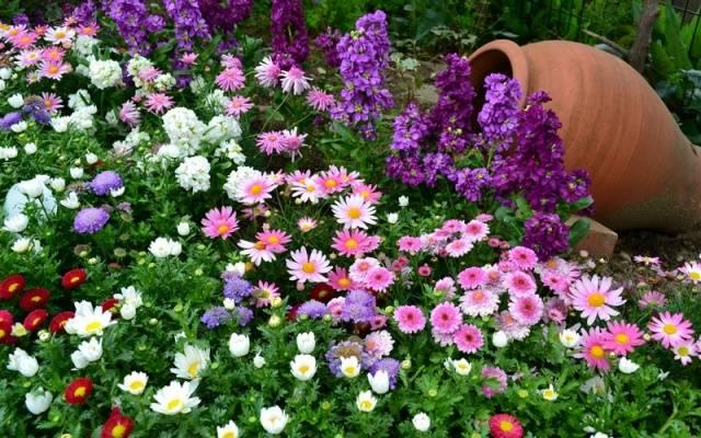 Цветники из многолетников своими руками