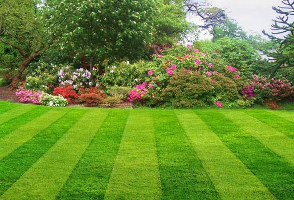 Гербициды для газона от сорняков
