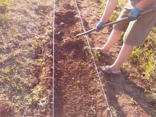 Посадка клубники осенью подготовка почвы удобрения