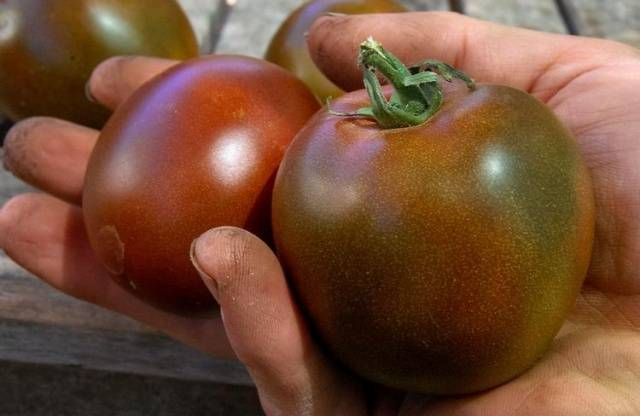 Высокорослые помидоры лучшие сорта фото, видео, отзывы