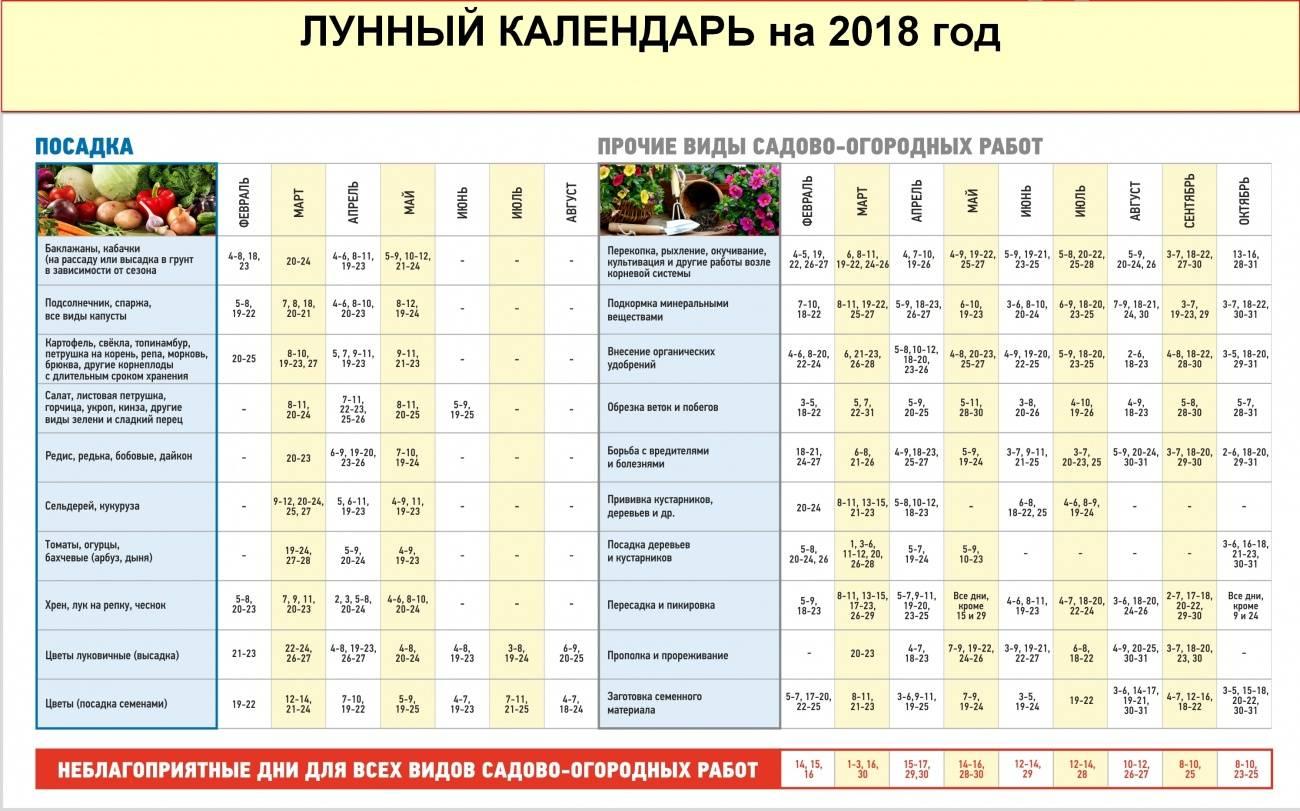 Посадка картофеля в 2019 году: календарь