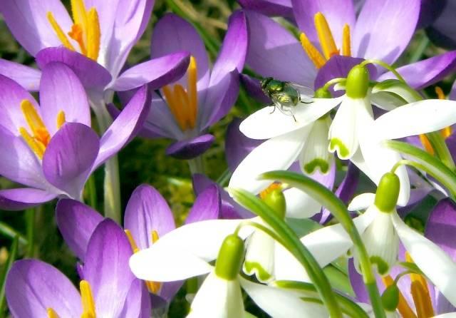 Цветы осени