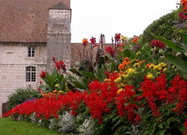 Цветы сальвия: как и когда сажать в клумбу, в открытый