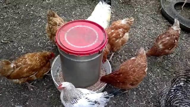 Самса с курицей пошаговый рецепт из дрожжевого