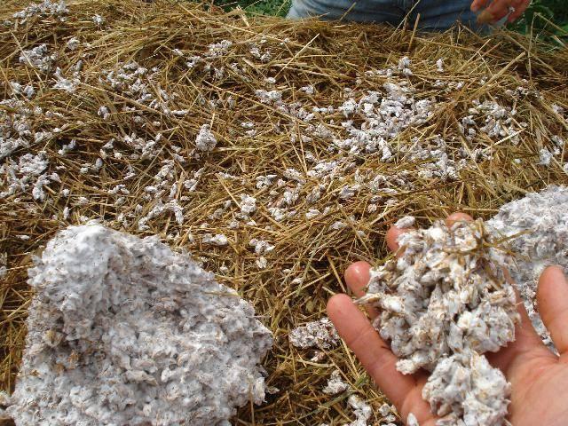 Купить мицелий грибов для выращивания в домашних условиях