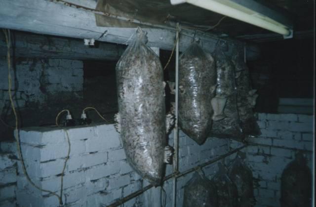 Изображение - Выращивание грибов вешенка 1990_4