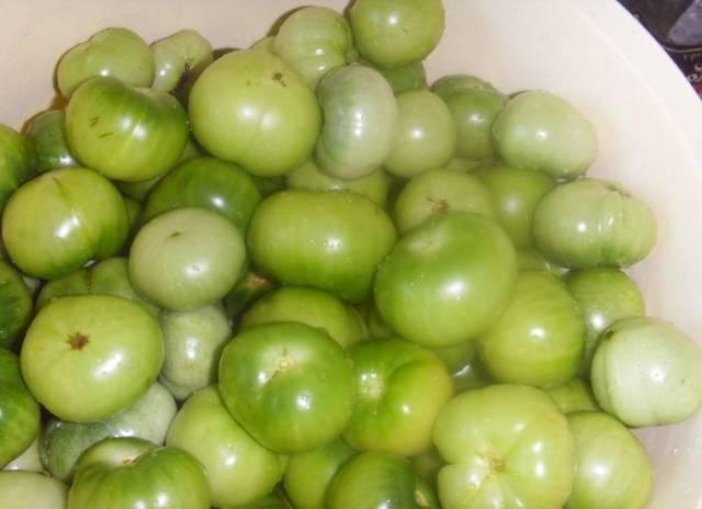 Засолка зеленых помидоров на зиму холодным способом