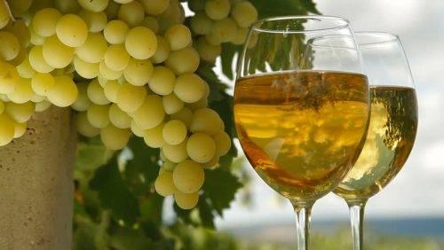 Виноград Цитронный Магарача описание сорта, фото, отзывы