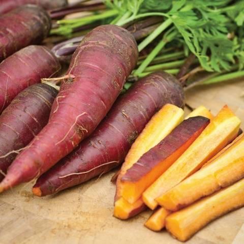 Белая морковь семена, описание сортов с фото