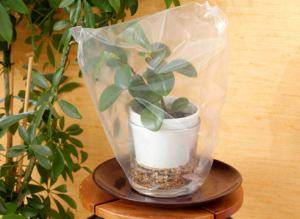 Автополив для комнатных растений своими руками