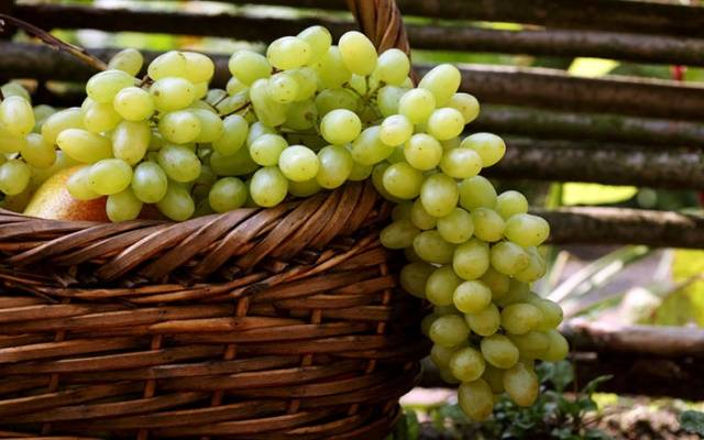 Домашнее вино из зеленого винограда