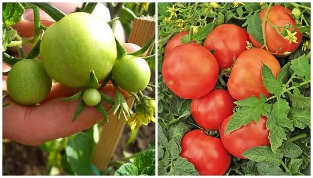 Типы соковыжималок для яблок с большой производительностью