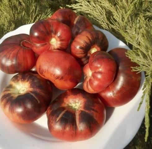 Томат Темный тигр: отзывы об урожайности сорта, описание и характеристика помидоров, фото семян