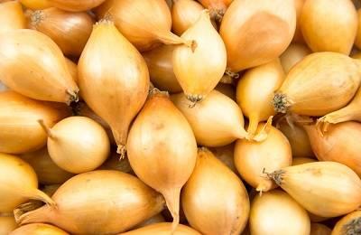 Лук-севок Центурион: описание сорта, фото, отзывы