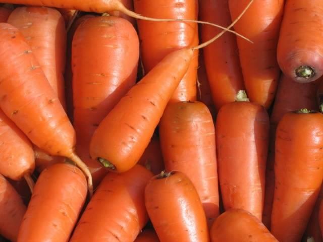 Картинки по запросу Правильный выбор сорта моркови