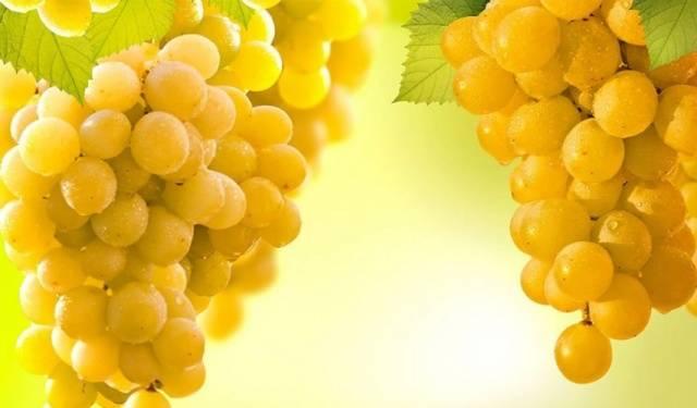 Виноград Ркацители описание сорта, фото, отзывы
