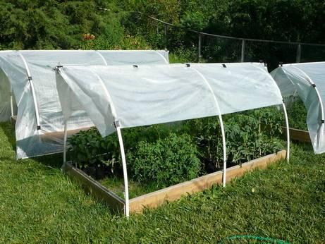 При какой температуре вырастить рассаду помидор