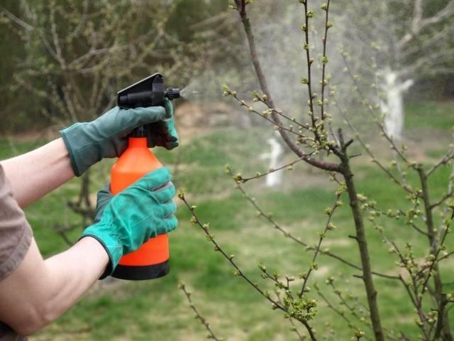 Весенняя подкормка плодовых деревьев и кустарников