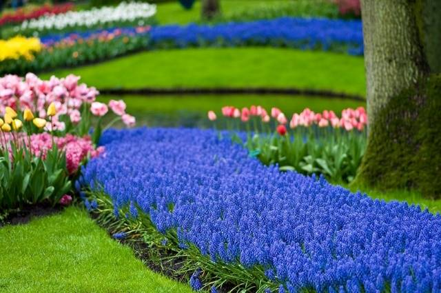 Многолетние синие садовые цветы