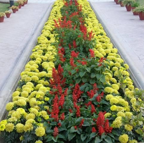 Как посадить цветы на прямоугольной клумбе