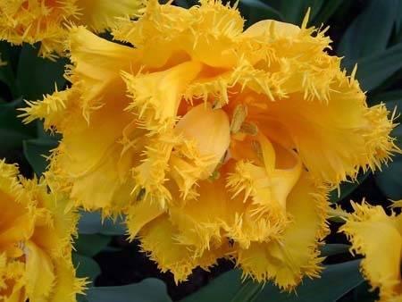 Желтые цветы-многолетники фото и названия