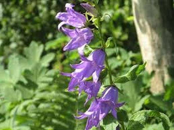 Цветы которые цветут все лето