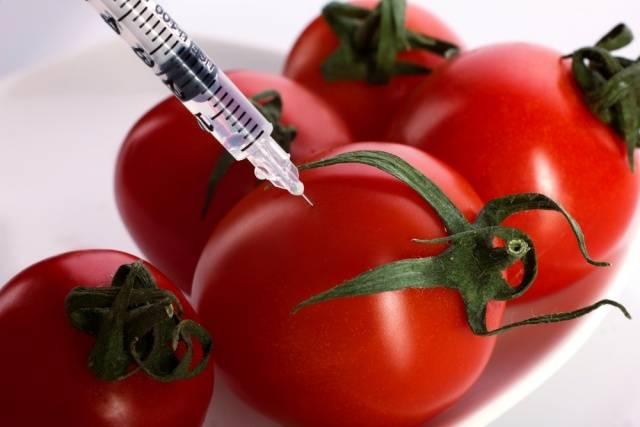 Фитофтора на помидорах профилактика