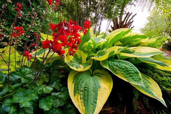 Эустомы: 100 ярких фото, выращивание в домашних условиях