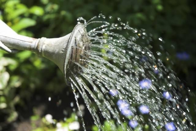 Баклажаны – выращивание рассады из семян, высадка в грунт