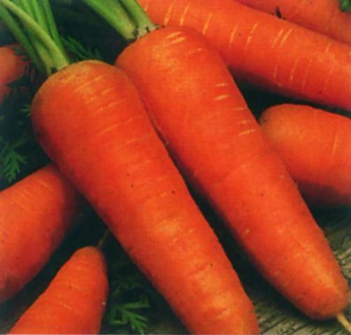 Лучшие сорта моркови ранние: посадка и уход