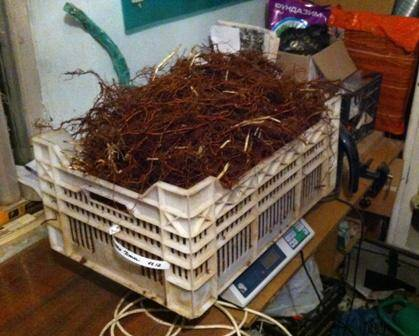 Размножение малины черенками осенью видео