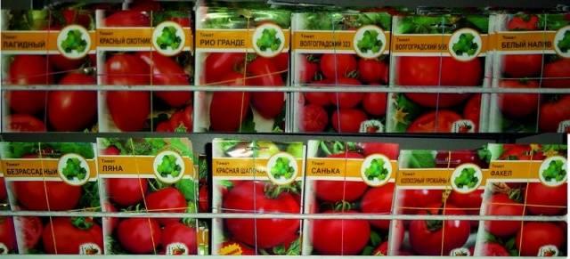 Подготовить семена помидоров к посадке на рассаду 998