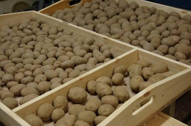 Посадка картофеля 74