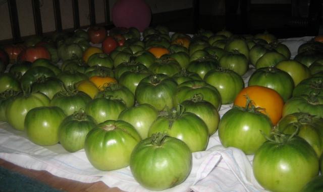 Картинки по Ðапросу томаты под диваном