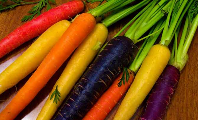 Морква шантане роял опис і фото