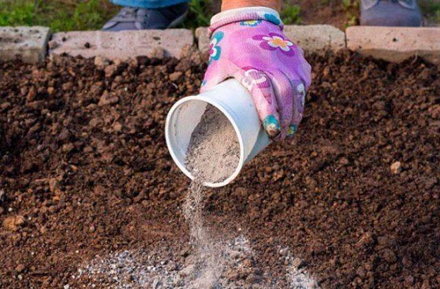 Выращивание мальвы из семян когда сажать на рассаду