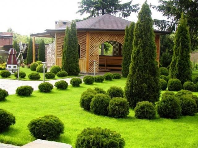Ландшафтный дизайн двора частного дома фото хвойниками