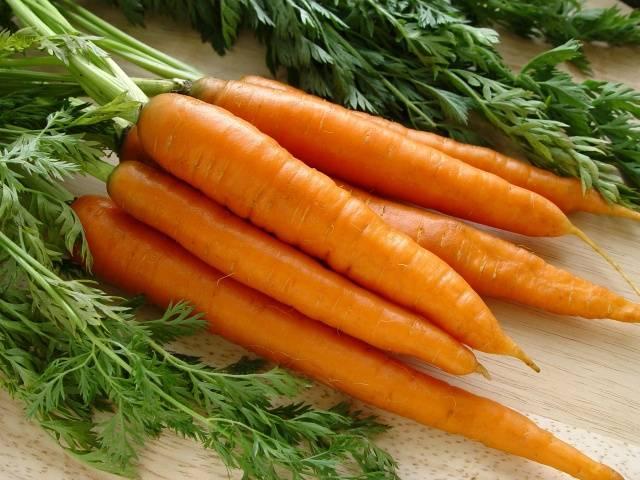 Морковь шантане роял описание и фото